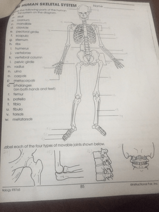 Solved  Name Skeletal System Worksheet 1  Label The Follow