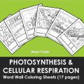 Photosynthesis And Cellular Respiration Coloring Worksheets