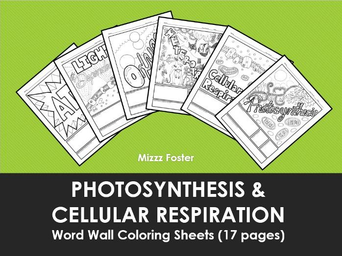 Photosynthesis And Cellular Respiration Word Wall Coloring Sheets