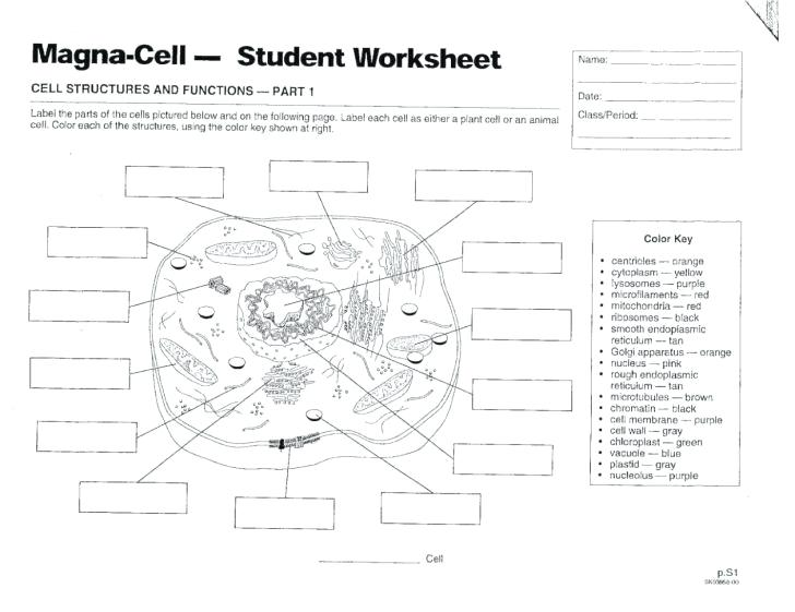 Plant Cell Label Worksheets – Odmartlifestyle Com