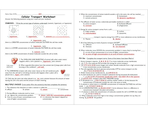 Tonicity Worksheets – Franceitaly Co