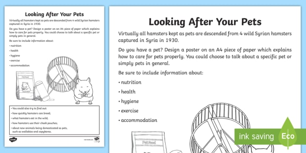 Looking After Your Pets Worksheet   Worksheet