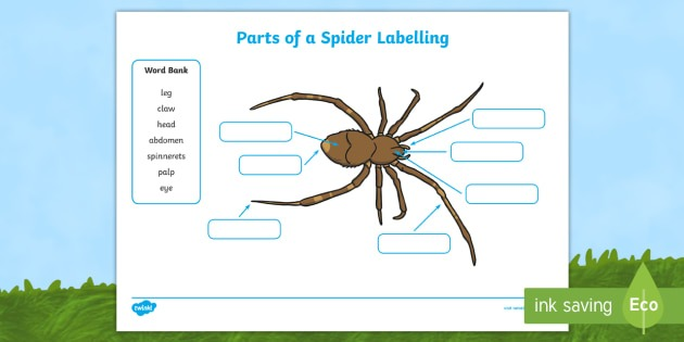 Parts Of A Spider Labelling Worksheets