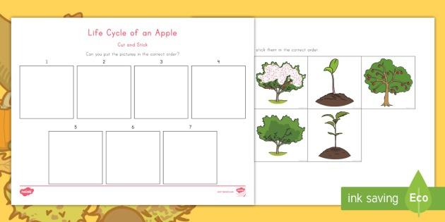 Life Cycle Of An Apple Cut And Stick Worksheet   Worksheet